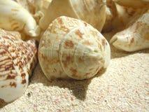 Shell van het strand Stock Foto's