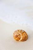 Shell van het strand Stock Afbeeldingen