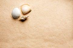 Shell van het zand Achtergrond stock foto's