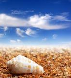 Shell van kegelslak op zandstrand Royalty-vrije Stock Fotografie