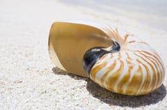 Shell van Nautilus Royalty-vrije Stock Foto