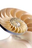 Shell van Nautilus royalty-vrije stock afbeelding