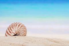 Shell van Nautilus op een strandzand, tegen blauwe overzees Stock Afbeelding