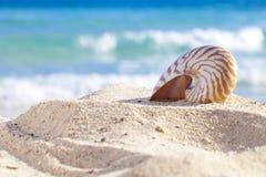Shell van Nautilus op een strandzand, tegen overzeese golven Stock Foto