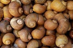 Shell van slakken Royalty-vrije Stock Fotografie