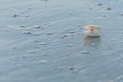 Shell vide sur la plage image stock