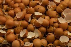 Shell von Eier lizenzfreies stockbild