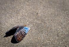 Shell vuoto sull'Oregon costeggia Immagini Stock Libere da Diritti