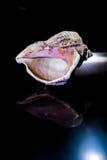 Shell w Ciemnym pokoju Fotografia Royalty Free