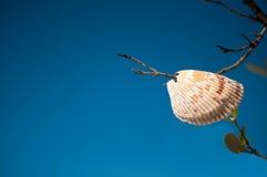 Shell w drzewie z nieba tłem obrazy royalty free