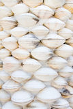 Shell wall Stock Photography