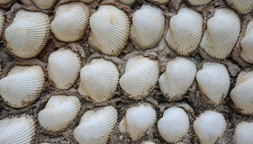 Shell wall, Background texture Stock Images