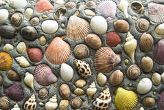 Shell wall Royalty Free Stock Photography