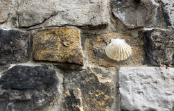 Shell in wall Royalty Free Stock Photos