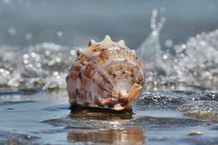 Shell in the water stock images