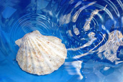 Shell in the water Stock Photo