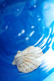 Shell in the water Royalty Free Stock Image