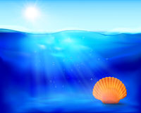 Shell in the water. Vector illustration. Stock Image