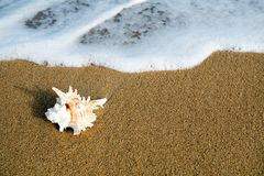 Shell & wave Royalty Free Stock Photos