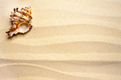 Shell on a wavy sand Stock Photos