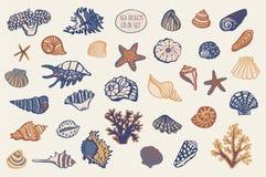 Shell wektoru podmorski światowy set Fotografia Stock