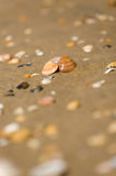 Shell in wet sand on the beach Royalty Free Stock Photo