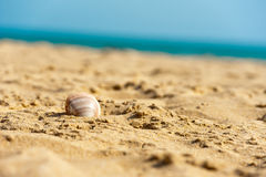 Shell in wet sand on the beach Royalty Free Stock Photos