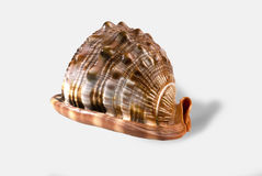 A shell from white background. Shell close-up, natural beauty Stock Photo