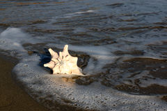 Shell. White shell on the beach Royalty Free Stock Images