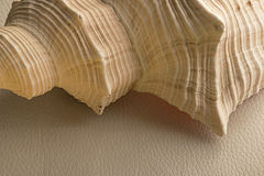Shell on white leather. Portion of beige rose shell on clear leather Royalty Free Stock Photography