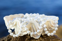 Shell with white pearls Stock Photo