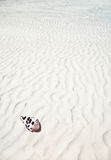 Shell on a white sand beach Stock Photo