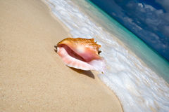 Shell on a white sand beach near blue see Royalty Free Stock Images