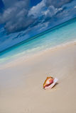 Shell on a white sand beach near blue see. In summer Stock Photo