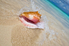 Shell on a white sand beach near blue see Royalty Free Stock Photos