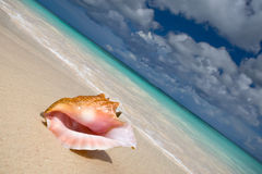 Shell on a white sand beach near blue see Stock Photography