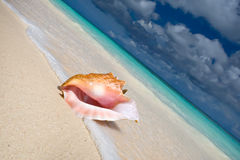 Shell on a white sand beach near blue see. In summer Royalty Free Stock Photo