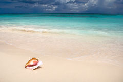 Shell on white sand beach near blue see in summer stock photography