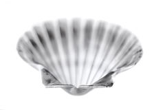 Shell on the white Royalty Free Stock Image