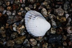 Shell. White shell in the sea Royalty Free Stock Photo