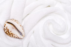 Shell on white towels c Stock Photography