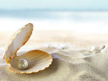 Shell With A Pearl Royalty Free Stock Photo
