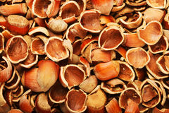 Shell of wood nuts Royalty Free Stock Photo