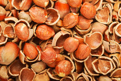 Shell of wood nuts and nuts Stock Image