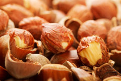 Shell of wood nuts and nuts Stock Images