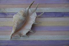 Shell. On the wooden colored plank Royalty Free Stock Photo