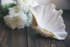 Shell on wooden table with selective soft focuse. Shell on wooden table. White flowers are on the background Royalty Free Stock Images