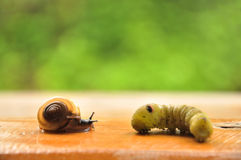 Shell and worm. In the garden Royalty Free Stock Image