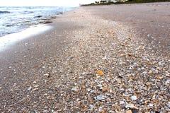 Shell wykłada Fotografia Royalty Free