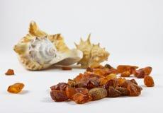 Shell y ámbar del mar en el fondo blanco Foto de archivo